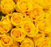 Продвижение магазина Вконтакте по продаже букетов из роз